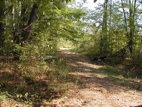 41 +/- Acre Pine Plantation : Collins : Covington County : Mississippi