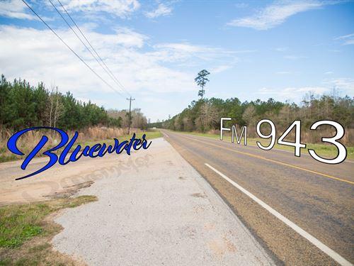 5.9 Ac T 4-6 Bluewater & Griffen Rd : Schwab City : Polk County : Texas