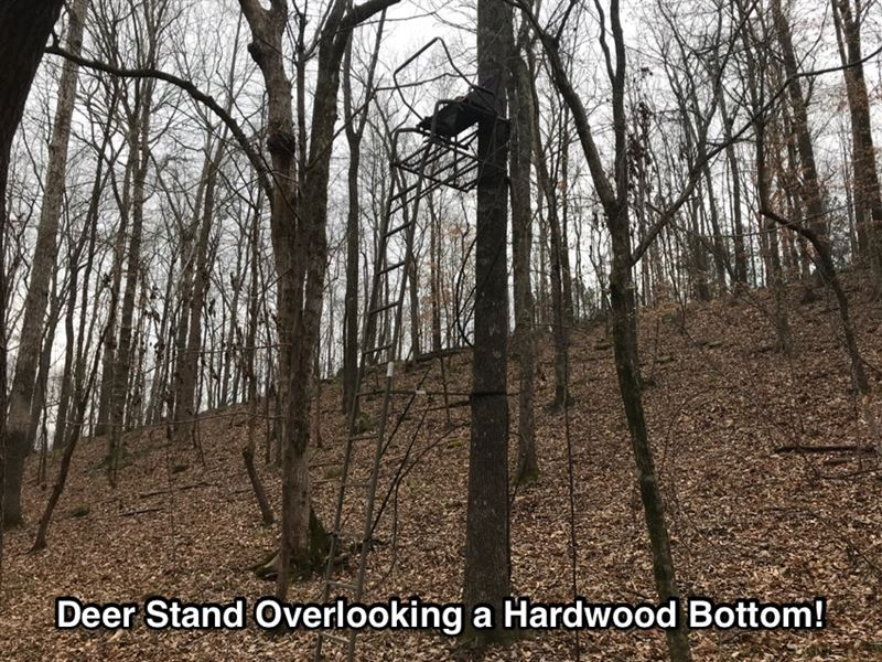 Huge Hardwoods And Great Hunting : Junction City : Talbot County : Georgia