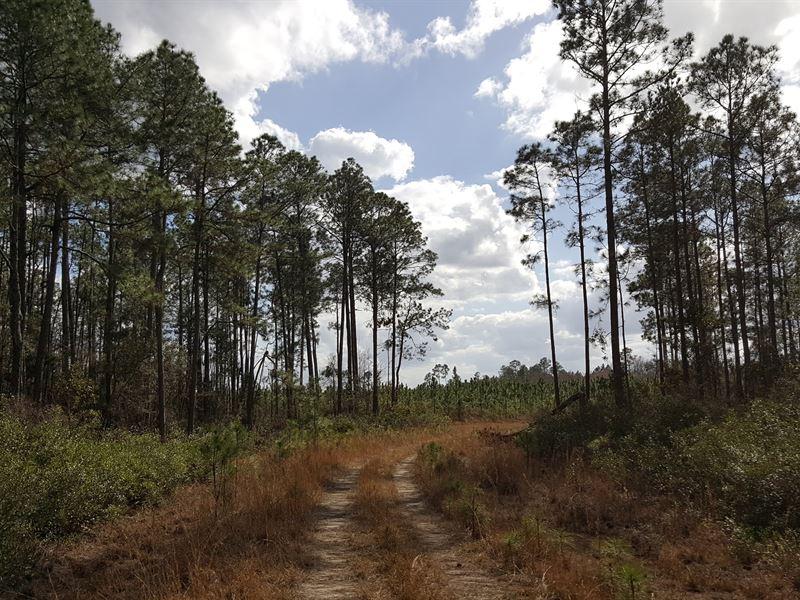Productive Timber And Farmland : Pearson : Atkinson County : Georgia