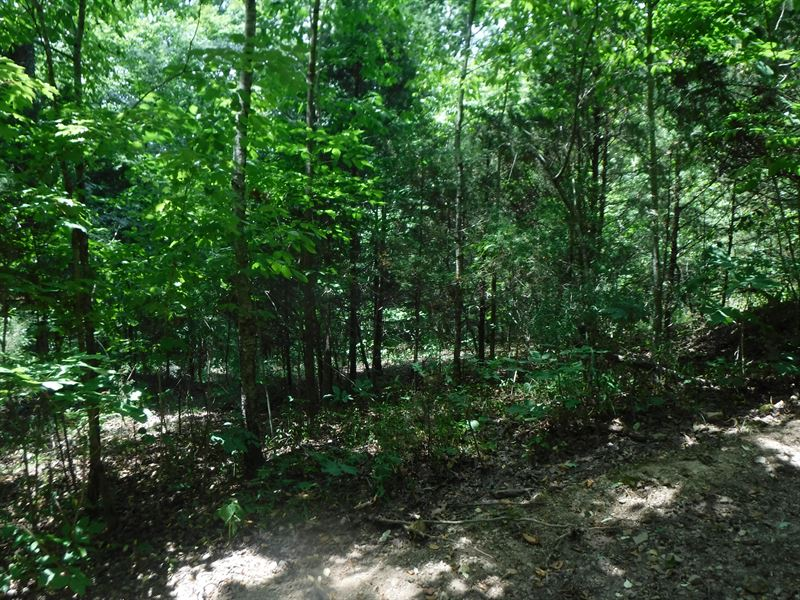15.06 Ac Awesome Mtn & Valley View : Celina : Clay County : Tennessee