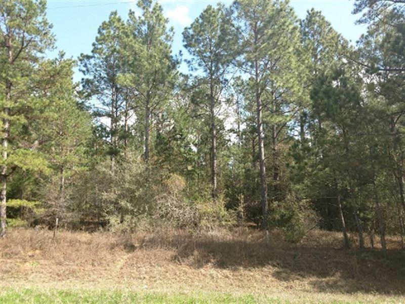 78 Acres Timberland Near Ozark : Ozark : Dale County : Alabama