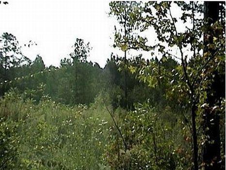 19 +/- Acre Pine Plantation : Prentiss : Jefferson Davis County : Mississippi