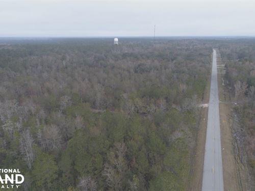 41 Acre Old Ccc Road Estate : Brunswick : Glynn County : Georgia