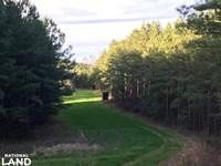 Cullman Trophy Deer Hunting/Timber : Hanceville : Cullman County : Alabama