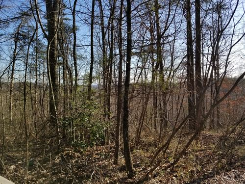251+/- Acres Hunting & Creeks : Palmer : Marion County : Tennessee