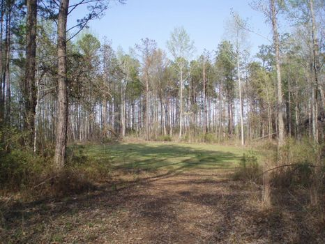 120 Acres Hunting / Investment : Gordon : Wilkinson County : Georgia