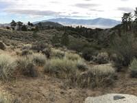 1.4 Acre Tehachapi Mountain Getaway : Tehachapi : Kern County : California