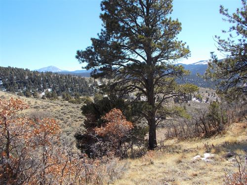Lot 279 - Forbes Wagon Creek Ranch : Fort Garland : Costilla County : Colorado