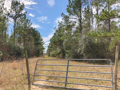 11.12 Ac Fm 230 Kittrell Acres : Trinity : Walker County : Texas