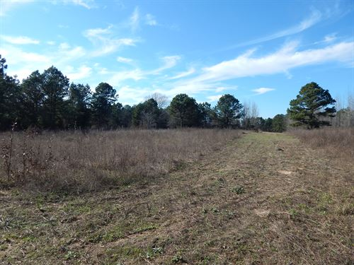 Recreational Investment Land : Diana : Upshur County : Texas