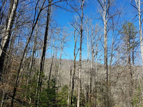 Betty's Creek Tract : Sylva : Jackson County : North Carolina