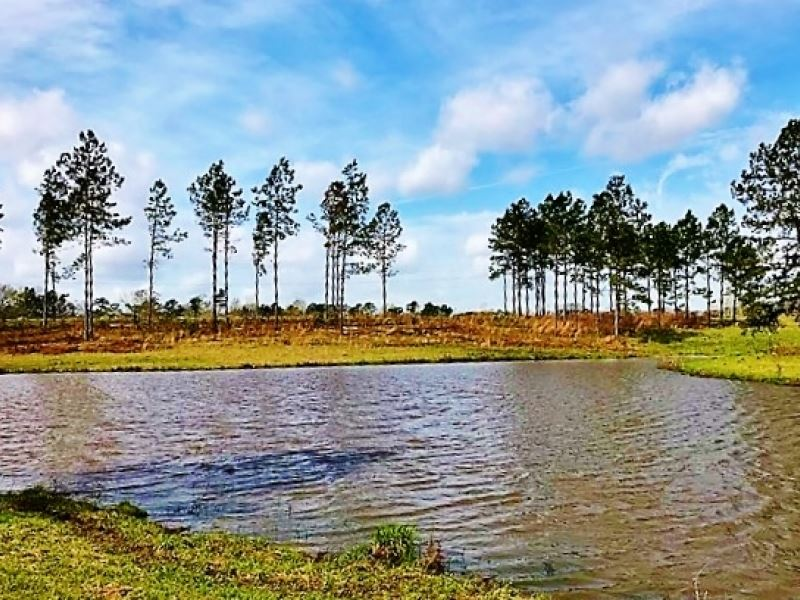24.77 Acres Prime Residential Land : Purvis : Lamar County : Mississippi