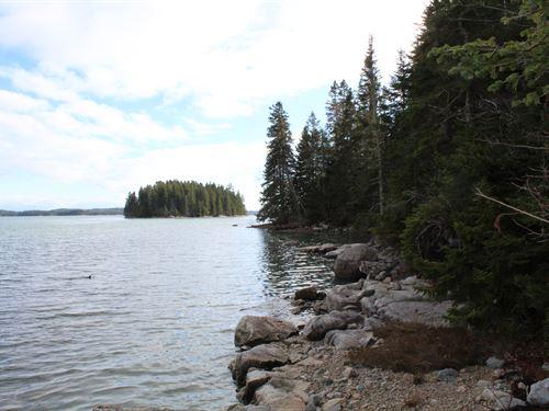 Steuben Coastal Forest : Steuben : Washington County : Maine