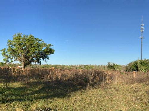 5.24 Acre Homesite With Excellent : Lakeland : Polk County : Florida