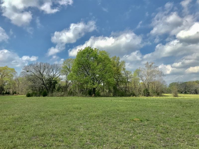 20 Acres Hopkins County : Sulphur Springs : Hopkins County : Texas