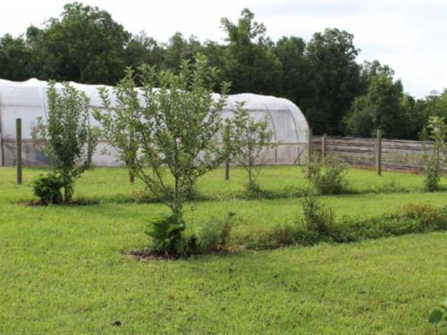 27.84 Ac Farm W/ Home, Greenhouse : Clarkrange : Fentress County : Tennessee