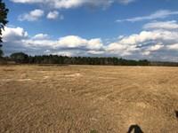 Beautiful Secluded Farm Shannon : Shannon : Hoke County : North Carolina