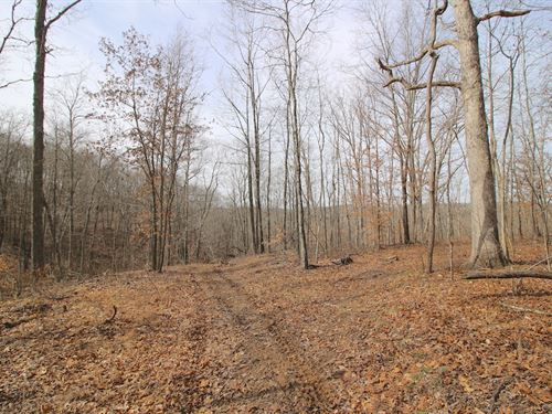 Jacksonville Rd - 176 Acres : Millfield : Athens County : Ohio