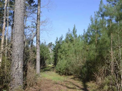 420 Acres, Timber, Ranch, Subd : Lufkin : Angelina County : Texas