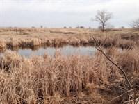 Grass Pasture, Cropland & Minerals : Wakita : Grant County : Oklahoma