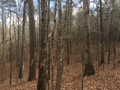 Hunting/Timber Tract : Carthage : Leake County : Mississippi