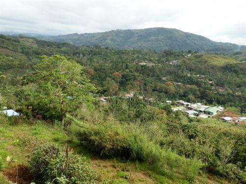 Rustic Mt. Cabin On 1/2 Acre : Tucurrique : Costa Rica