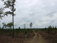 Recreational Property With Timber : Butler : Taylor County : Georgia
