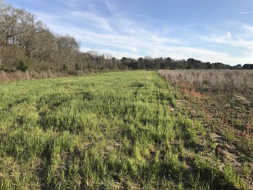 Pleasant Field Tract : Newton : Dale County : Alabama