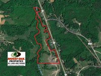 26 Acres of Hunting Land For Sale : Yanceyville : Caswell County : North Carolina