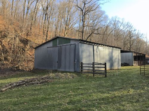 Borland Rd - 80 Acres : Ray : Jackson County : Ohio
