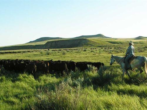 Cinch Buckle Ranch : Broadus : Powder River County : Montana