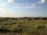 Popham Ranch : Upton : Weston County : Wyoming