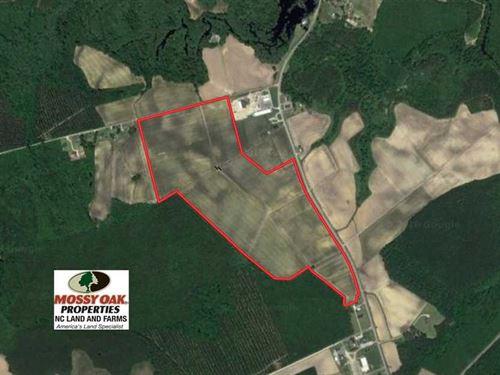 Under Contract, 130 Acres of Prim : Trenton : Jones County : North Carolina