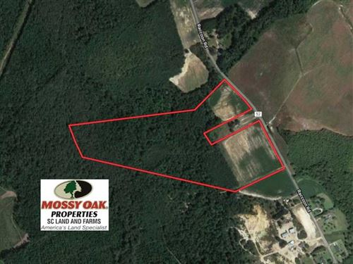 Reduced, 55.21 Acres of Hunting : Mayesville : Lee County : South Carolina