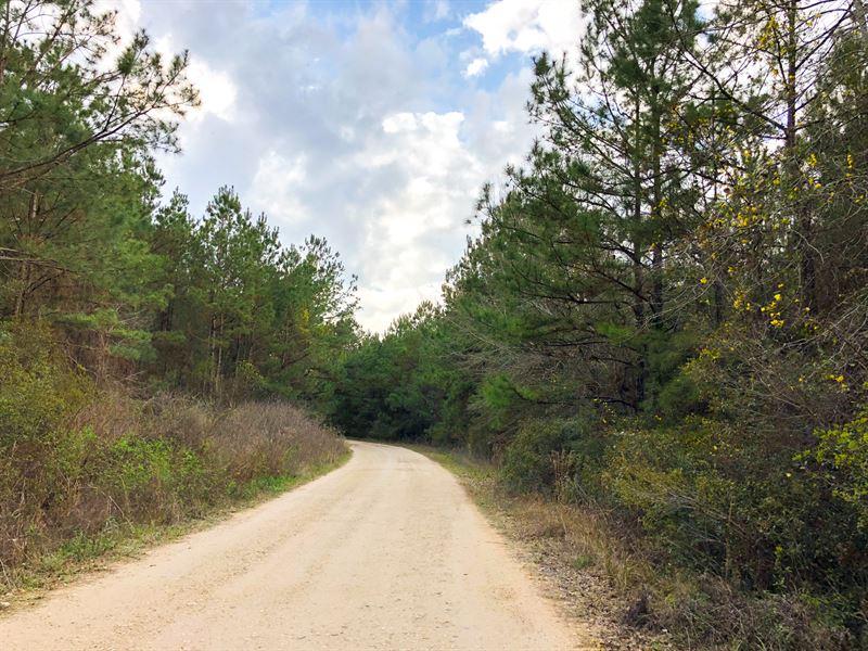 244 Ac Tom Marsh Road : Segno : Polk County : Texas
