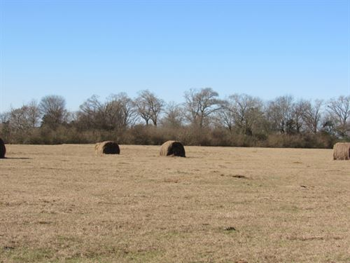 70 Acres Pastureland : Tylertown : Walthall County : Mississippi