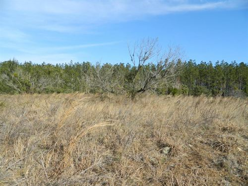 1.12 Acres In Pomona Park, FL : Pomona Park : Putnam County : Florida