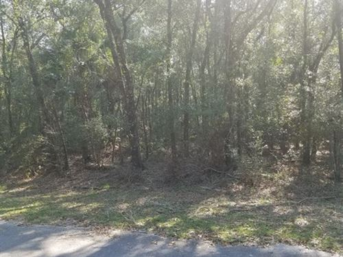 Reduced 1 Ac Lot 774479 : Bell : Dixie County : Florida