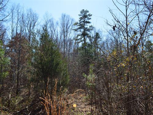 12.85 Acres In Pauline : Pauline : Spartanburg County : South Carolina