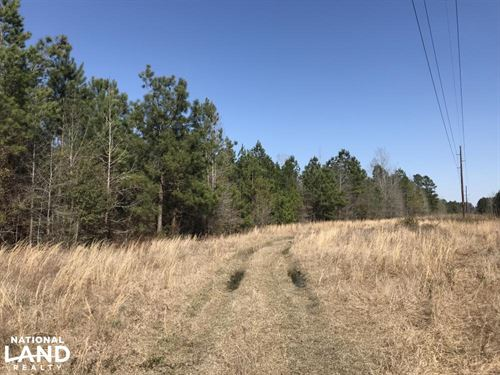 Fitch Rd Timber Land : Lake City : Williamsburg County : South Carolina