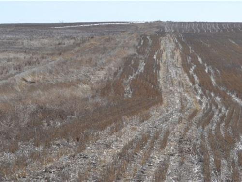 Schuessler Dryland : Potter : Kimball County : Nebraska