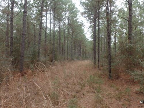 371 Ac, Timber Invest Tract : Kountze : Hardin County : Texas