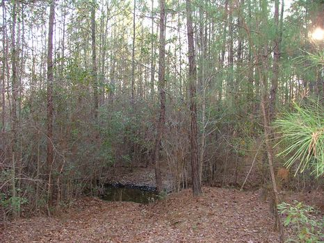 FL Hunters- 108 acres I-16 Frontage : Swainsboro : Emanuel County : Georgia