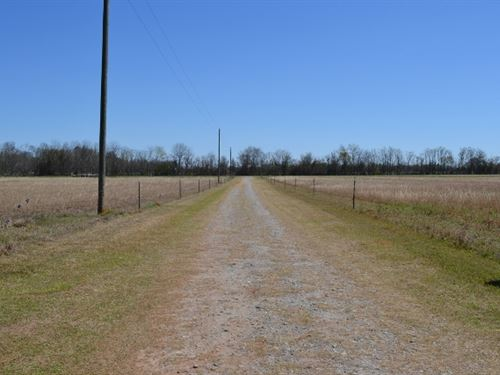 Watermelon Road : Tennille : Washington County : Georgia