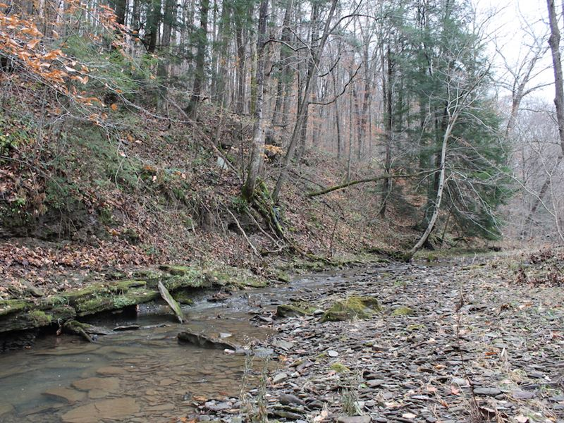 Old Camp Rd, 15 Acres : New Matamoras : Washington County : Ohio