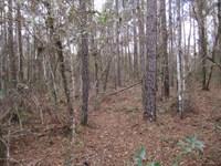 Hines 76 Acres : Gainesville : Alachua County : Florida