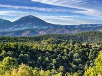 Wooded Mountain Top Homesite : Trinidad : Las Animas County : Colorado