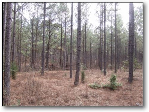 54 Acres In Choctaw County : Ackerman : Choctaw County : Mississippi