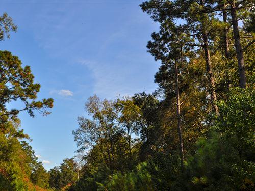 1671 Acres Cr 347 Plum Grove : Plum Grove : Trinity County : Texas